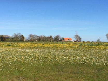 Frühlingswiese auf Årø