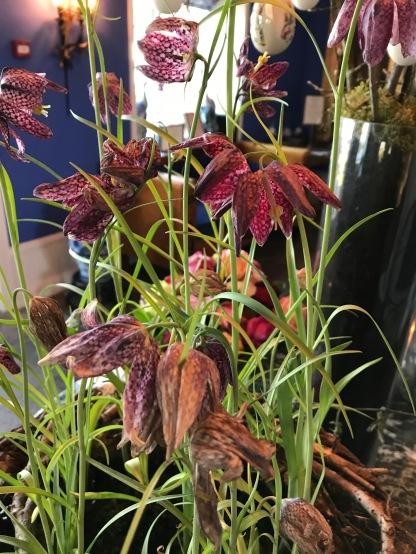 Schachbrettblumen im Foyer